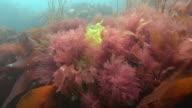 Seaweed and Kelp video