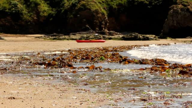 Seaweed Beach video