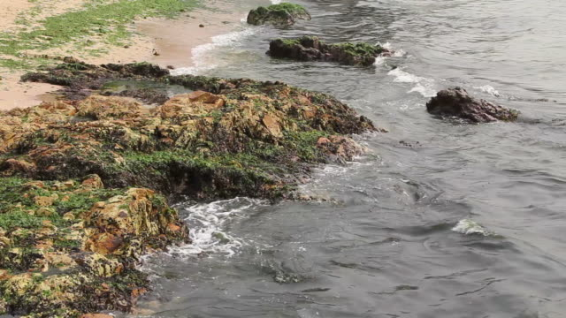 Seaweed on the beach. video