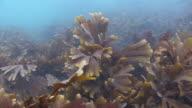 Seaweed video