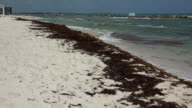 Seaweed Washed Up On Shore video
