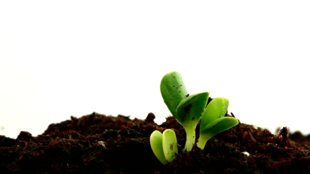 seedlings video