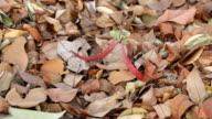 Seeds falling video