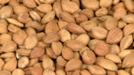 Seeds of apricot close-up video