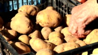 HD: Selling Potato video