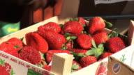 HD: Selling Strawberries video