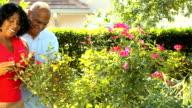 Senior African American Couple Tending Garden video