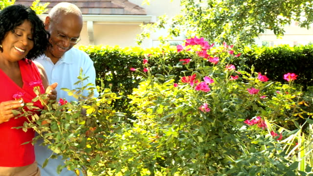Senior African American Couple Tending Garden video