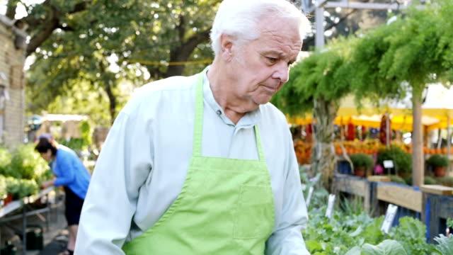 Senior Caucasian farmer's market employee watering leafy green plants video