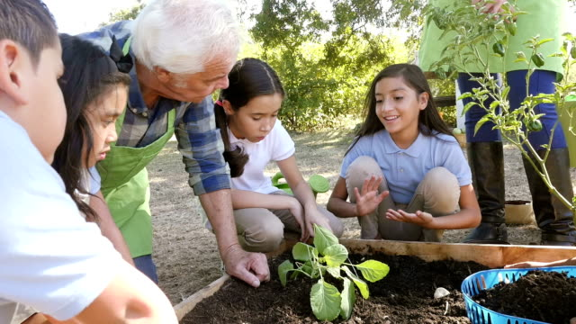 A senior Caucasian male farmer talks about gardening to a group of private elementary students video