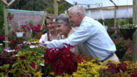 Senior couple choosing plants and talking to business owner video