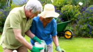 Senior couple gardening together in backyard video