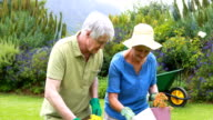 Senior couple gardening together video