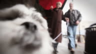 Senior couple take dog for a walk. video