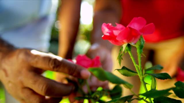Senior Ethnic Hands Tending Flower Bushes video