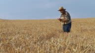 HD DOLLY: Senior farmer pleased with crop in wheat field video