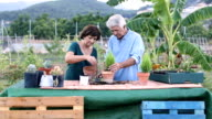 Senior man and woman working together in your garden video