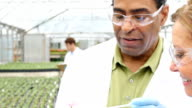Senior scientists discuss test results while studying plant life in greenhouse video