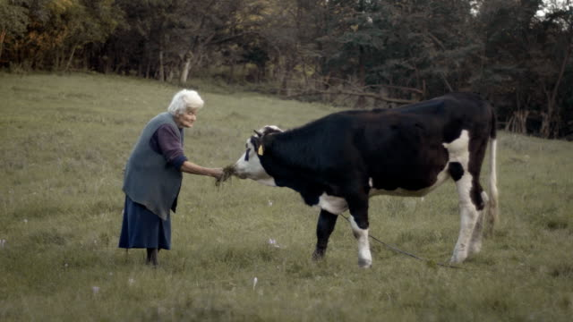 Senior Woman and A Cow video