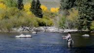Senior Woman Fly-Fishing in Colorado video