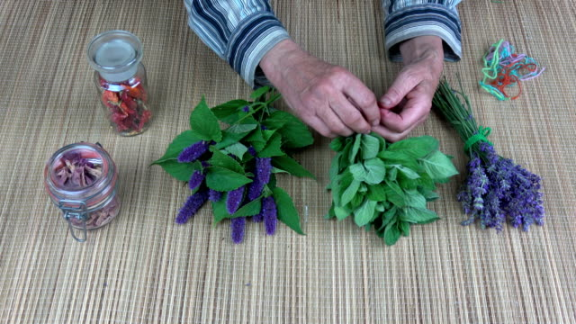 Senior woman hands binding mint bunch for dry video