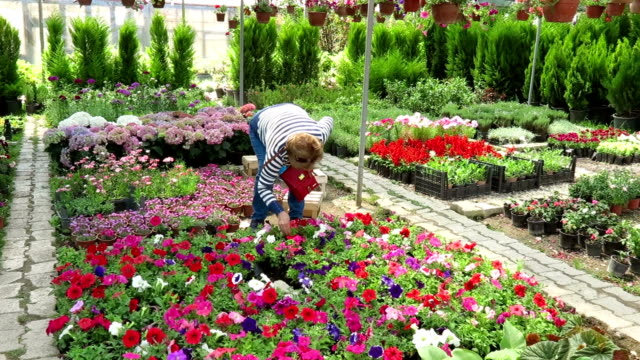 Senior Woman in Flower Market video