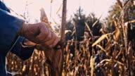 SLO MO Senior Woman Peeling The Corn video