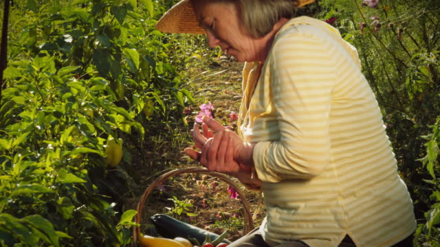 Senior woman rubs her hands while picking vegetables. video