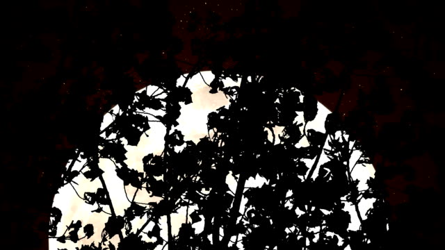 Sepia Moon in the Woods video