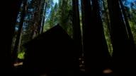 Sequoia Grove video