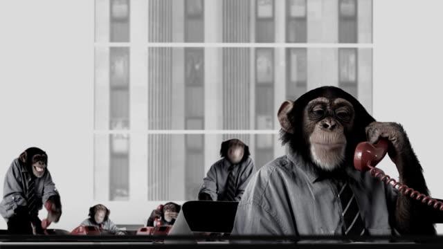 Service Monkey Team video