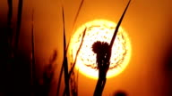 Setting Sun Blowball video