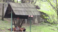 Several hens and a rooster resting and preening their feathers under a shelter of a peasant's household video