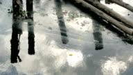Sewage video