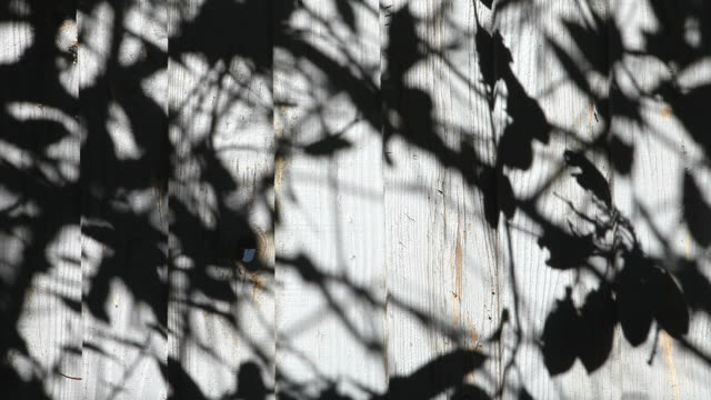 Shadows on a Fence video