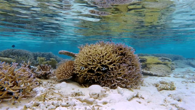 Shallow water coral reef on Maldives - South Ari Atoll video