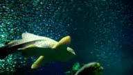 shark and tuna close to video