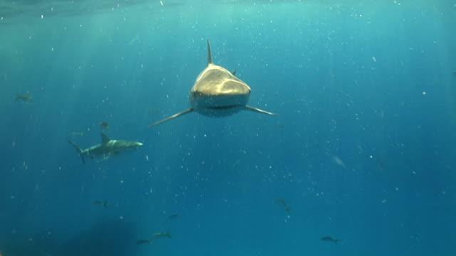 Shark hits camera video
