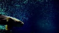 shark in the sunshine video