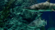 sharks swimming under water video