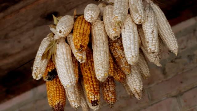 sheaf of corn video