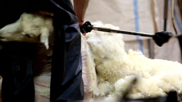 Shear video