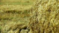 sheaves of hay in a field video