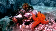 Shells and sea urchins among rocks on seabed. video