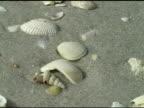 Shells on a Sandy Beach NTSC video