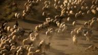 Shepherd video