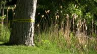 sheriff line around a tree cordoned of murder scene. video