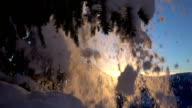 SLOW MOTION: Shining snowflakes falling from spruce branch at golden sunset video