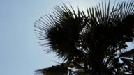 Shining Sun With Palm Tree video