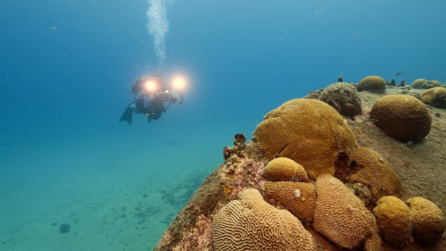 Ship wreck as a part of the coral reef in the Caribbean Sea around Curacao with diver photographer in blue background video